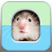 App Icon: Hamstergram 1.0
