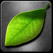 App Icon: Fresh Leaves