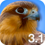 App Icon: iBird Pro North America