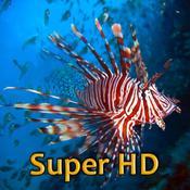 App Icon: Tropische Fische Super HD (für den neuen iPad) – Hintergründe für den iPad 2.3
