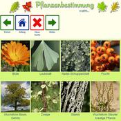 App Icon: Pflanzenbestimmung 1.3.0