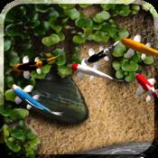 App Icon: Koi Live Wallpaper Gratis