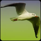App Icon: Vogelstimmen