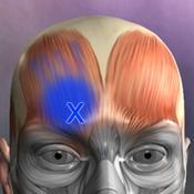 App Icon: Muskel Triggerpunkte 4.3